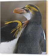 Royal Penguin Couple Courting Wood Print