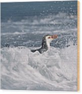 Royal Penguin Swimming In Surf Wood Print