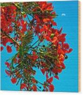 Royal Pioncianna 11 Wood Print