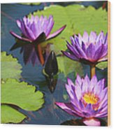 Royal Purple Water Lilies Wood Print