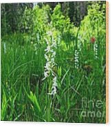 Royal Rain Orchid Wood Print