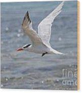 Royal Tern Flight Wood Print