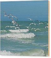 Royal Tern Frenzy Wood Print by Kim Hojnacki