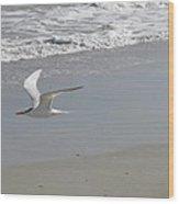 Royal Tern In Flight Wood Print