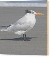 Royal Tern Seafoam Wood Print