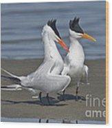 Royal Terns Dancing Wood Print