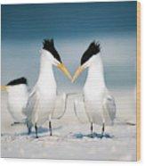Royal Terns Wood Print