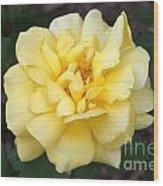 Royal Yellow Delight Rose... Wood Print