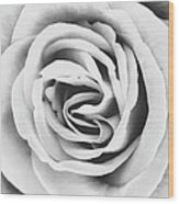 Rubellite Rose Bw Palm Springs Wood Print
