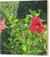 Ruby Red Hibiscus  Wood Print