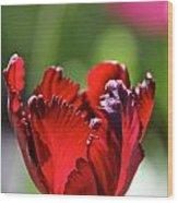 Ruby Scallops Wood Print
