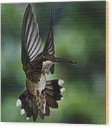 Ruby Throat Humming Bird Wood Print