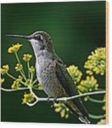 Ruby Throated Hummingbird 1 Wood Print
