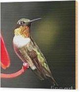 Ruby Throated Hummingbird 2 Wood Print