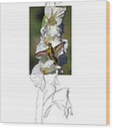 Ruby-throated Hummingbird 2am-104192 Wood Print