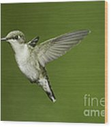 Ruby-throated Hummingbird At Flower Wood Print