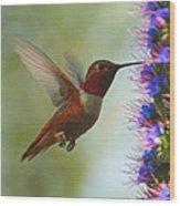Ruby Throated Hummingbird Digital Art Wood Print