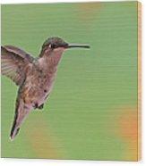 Ruby-throated Hummingbird Wood Print