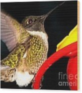 Ruby-throated Hummingbird Landing On Feeder Wood Print