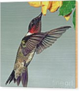 Ruby-throated Hummingbird Male At Flower Wood Print