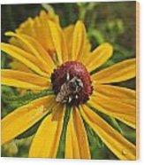 Rudbeckia Bee Wood Print