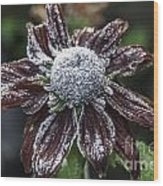 Rudbeckia First Frost Wood Print