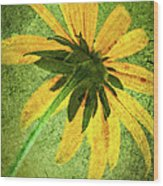 Rudbeckia On Cement Wood Print