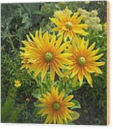 Rudbeckias With Green Centers Wood Print