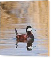 Ruddy Duck  Wood Print