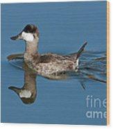 Ruddy Duck Drake Wood Print