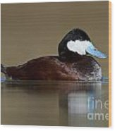 Ruddy Duck On Still Pond Wood Print