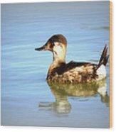 Ruddy Duck Wood Print