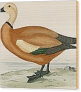 Ruddy Sheldrake Wood Print