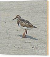 Ruddy Turnstone Wading Bird - Arenaria Interpres Wood Print