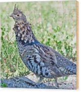 Ruffed Grouse In Minnesota Wood Print