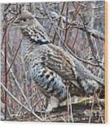 Ruffed Grouse Male Wood Print by Chris Heitstuman