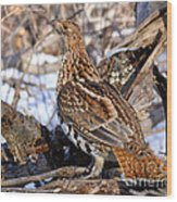 Ruffed Grouse On Alert Wood Print