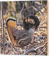 Ruffed Grouse Ruffed Up Wood Print