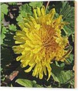 Ruffled Dandelion Wood Print