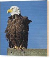 Ruffled Eagle Wood Print