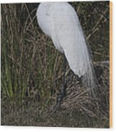 Ruffled Feathers Wood Print
