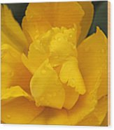 Yellow Ruffled Parrot Tulip Flower Wood Print