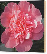 Ruffles In Pink. Wood Print by Terence Davis