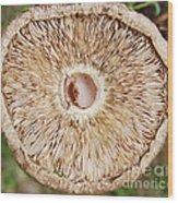 Ruffling Wavelets Wood Print