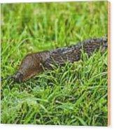 Rufous Garden Slug Wood Print