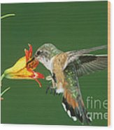 Rufous Hummingbird At Tiger Lily Wood Print