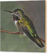 Rufous Hummingbird Wood Print