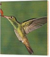 Rufous Hummingbird Feeding Wood Print