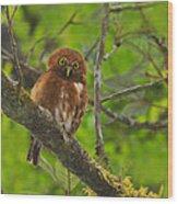 Rufous Morph Costa Rican Pygmy-owl Wood Print by Tony Beck