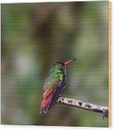 Rufous-tailed Hummingbird Wood Print